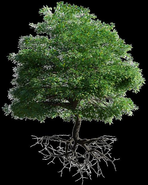 Baum Nachhaltigkeit